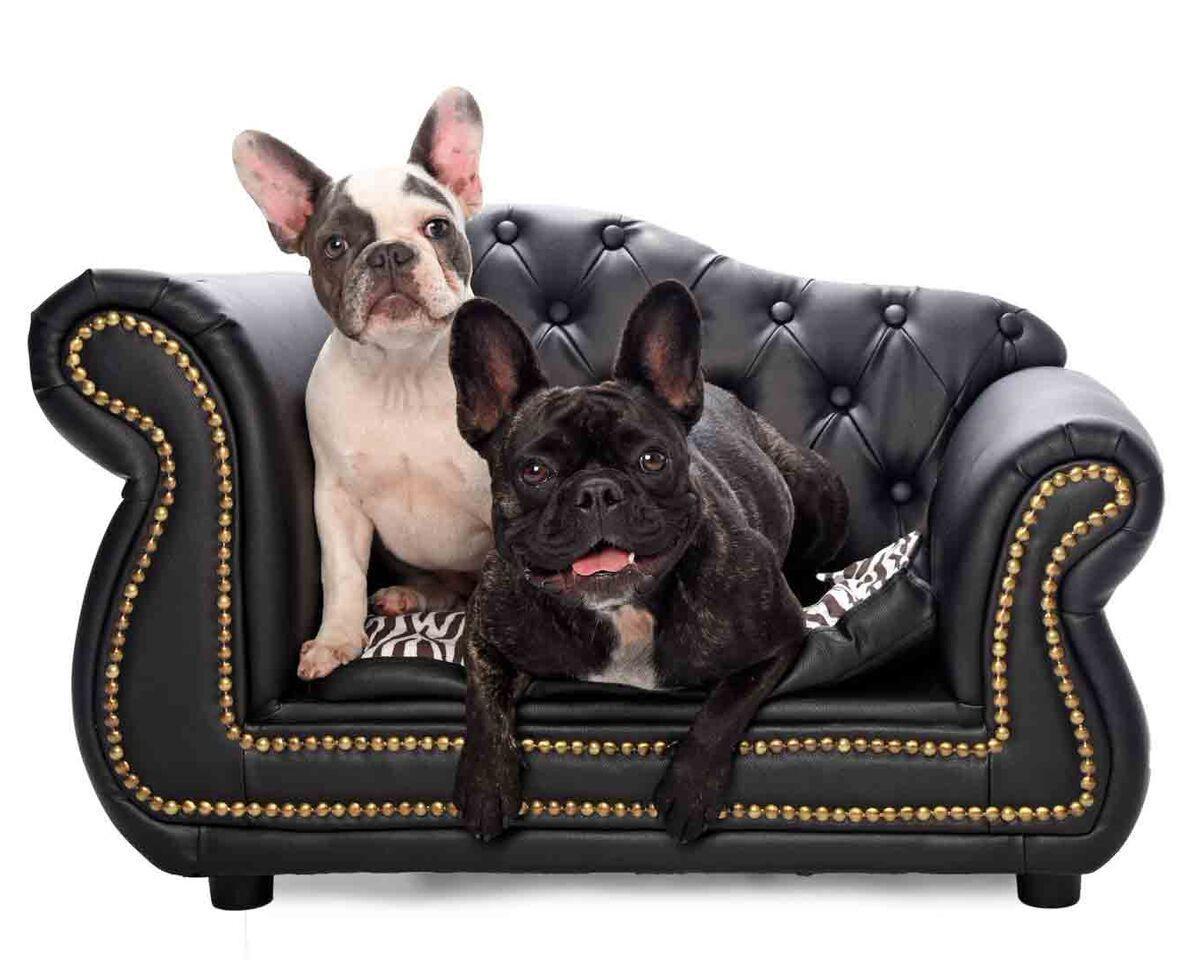 пакет собака в кресле картинка пусть этот светлый